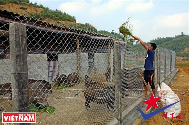 nhân công tại trang trại lợn rừng NTC